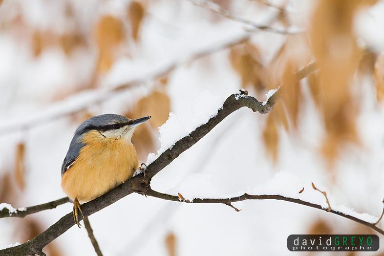 L hiver des oiseaux du jardin david greyo photographe for Jardin en hiver