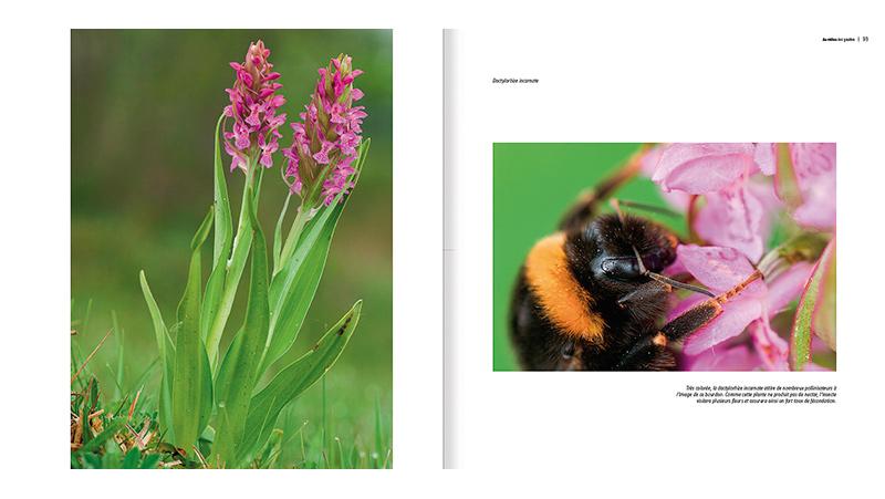 sauvage-orchidées_511_fr