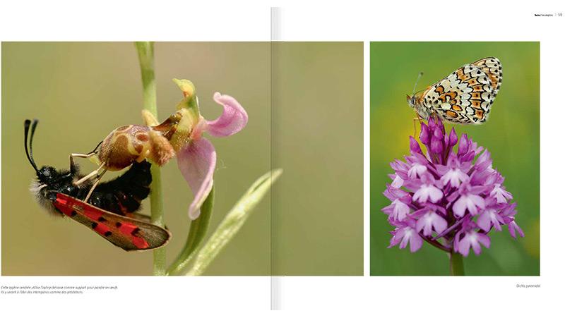 sauvages-orchidées_512_fr