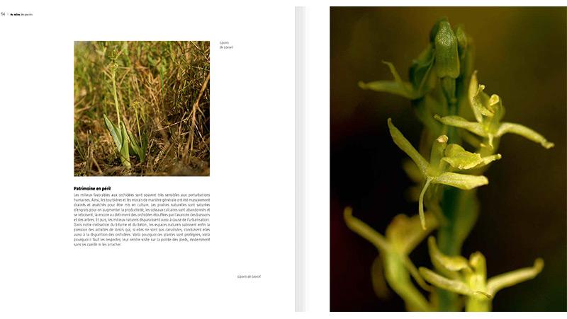 sauvages-orchidées_513_fr