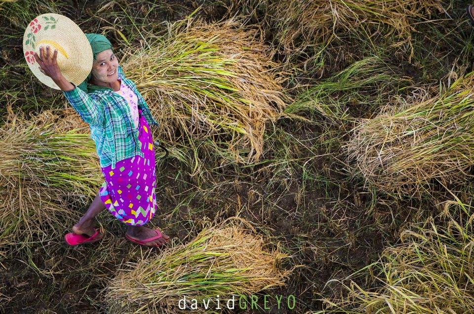 Semaine 49 : Sourire birman