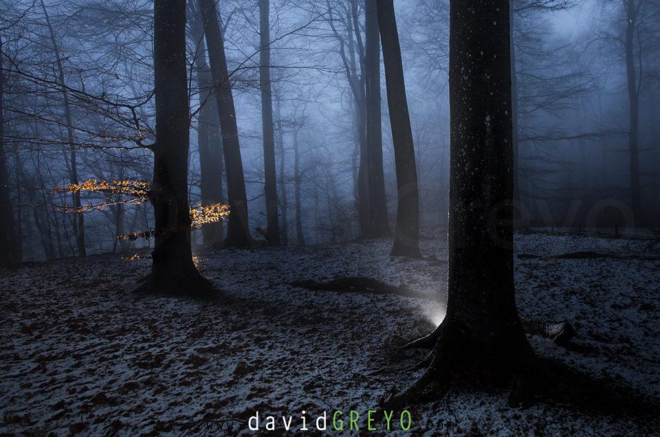 Semaine 3 : la forêt mystérieuse