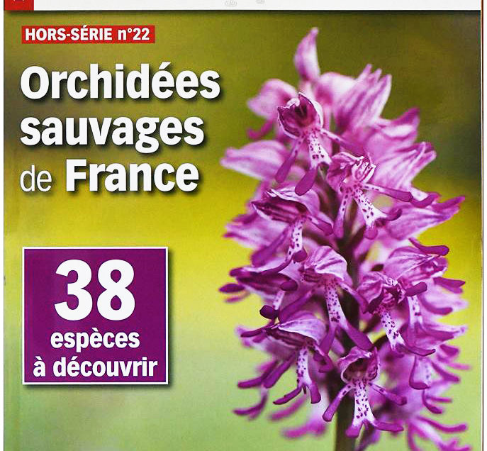 Images & Nature HS orchidées