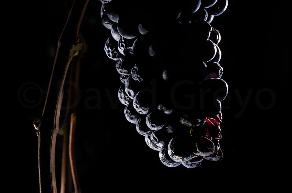 Semaine 42 : Vigne