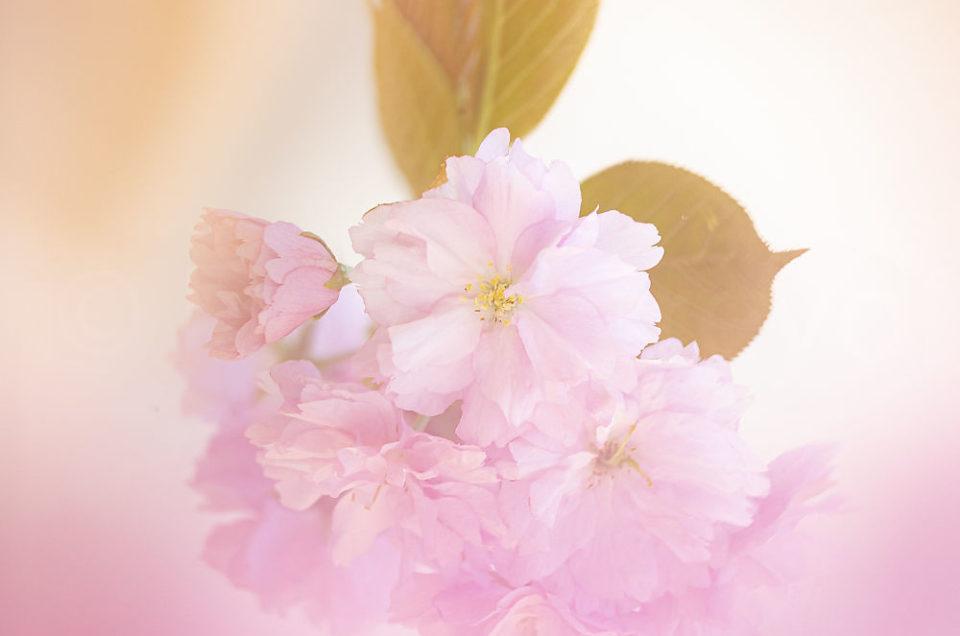 Semaine 16 : Un air de Japon