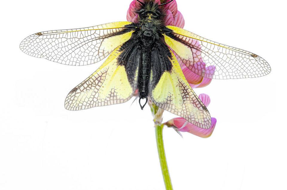 Insectes en tous genres